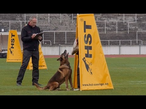 Working Dog FCI IPO World Championships 2014 Malmö, Sweden