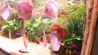 Kölle Zoo Heidelberg: Fütterung mit unserem STENDKER-Good Heart Diskusfutter
