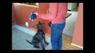 Impulse Control - How To Train Your Dog - Leave It And Drop It With Tug Toy - Dog Obedience Part 2
