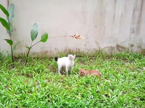 แก๊งลูกแมวข้างบ้าน