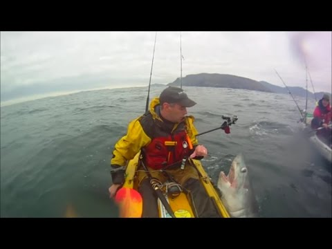 Porbeagle Shark, catch and release in Malin Head Donegal Ireland estimated at 150lb