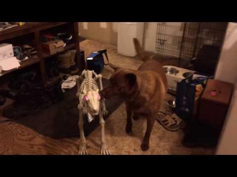 Dog's new friend prank