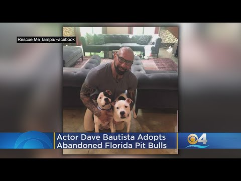 Katie Sommers - Gasparilla Grand Marshal: 'Guardians of the Galaxy' Star Dave Bautista