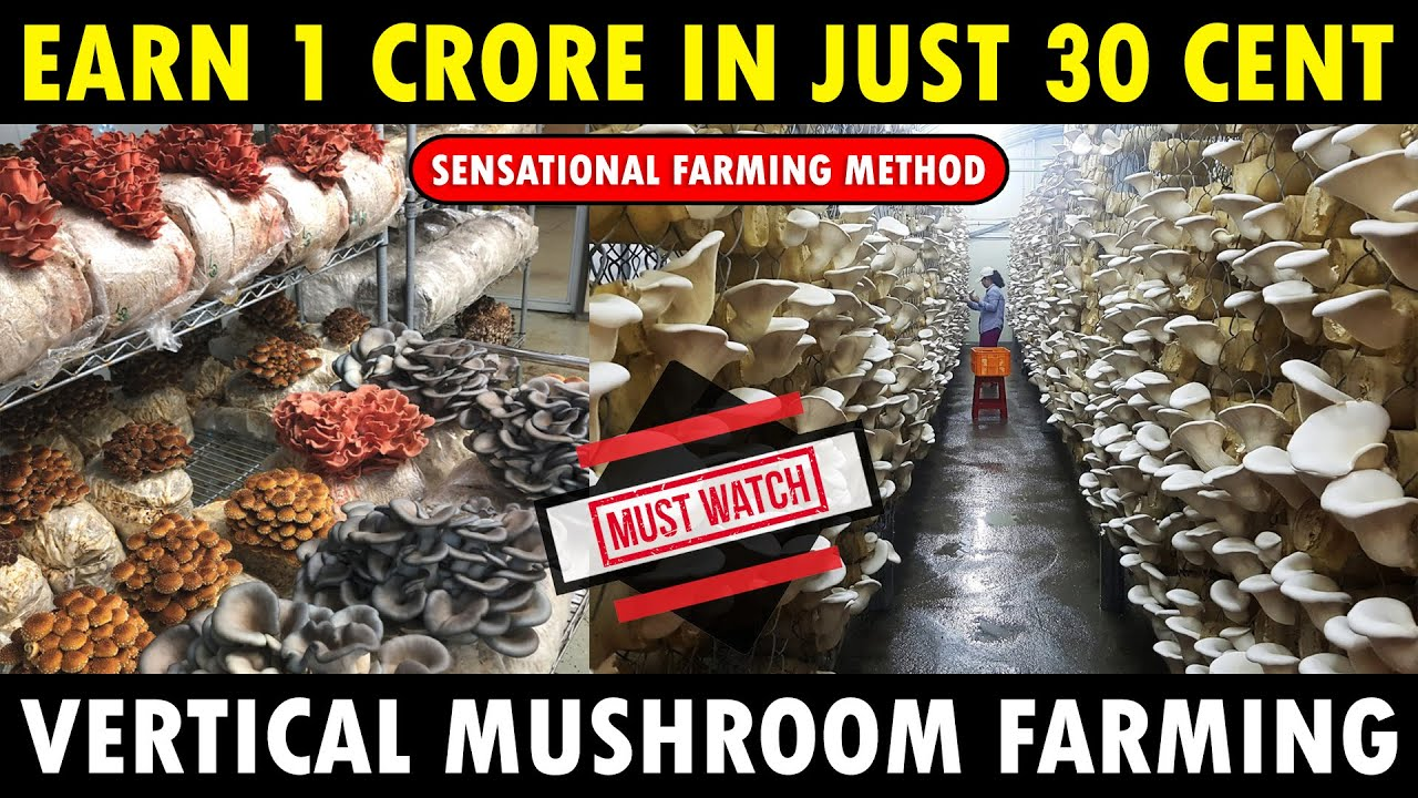 How to Earn 1 Crore in just 30 Cent Land..? | Vertical Mushroom Farming | Mushroom Cultivation