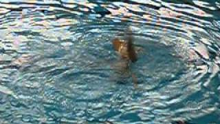 Ukrainian Synchronized swimmer during his solo on National Champion...