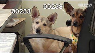 """내 이름은 '00238' ㅣ  Dogs With The Name By Numbers """"My Name Is 00238.."""""""