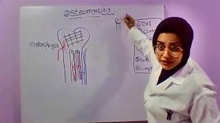 pada video kali ini berisi materi tentang patofisiologi penyakit pada tulang. sumber....