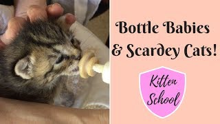 Caring for Bottle Baby Kittens  LOTS of work but so Worth it!