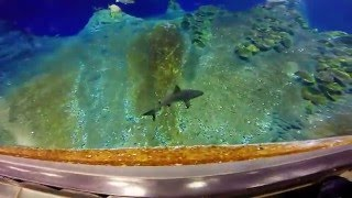 Afrykarium Oceanarium ZOO Wrocław - Płaszczki, rekiny i tłumy ludzi