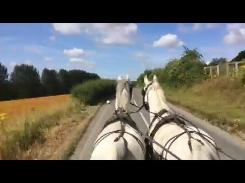 Driving horses for commercial carriage work - can you buy experience?