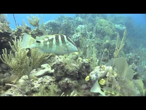 Seamount of Life: Saving an Underwater Oasis for Spawning Fish (Full) | Pew & This American Land