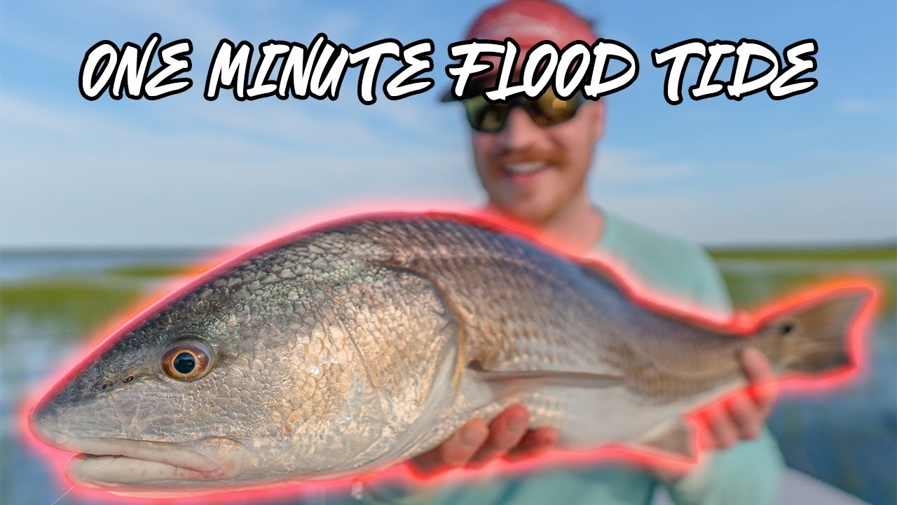 60 SECOND FLOOD TIDE! Fly Fishing for Redfish in Beaufort, SC