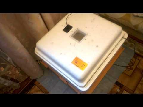 подготовка инкубатора Несушка к работе