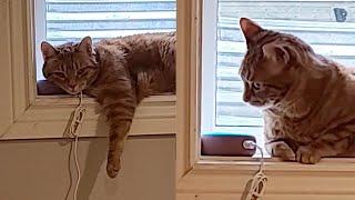 Pet Owner Pranks Cat By Using Alexa