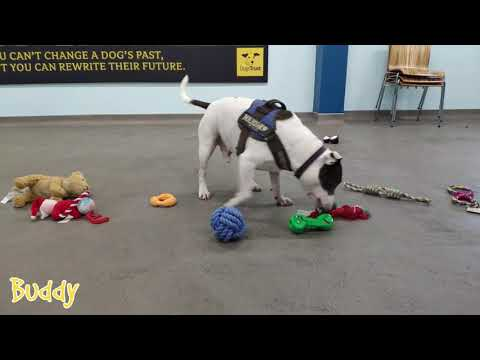 Jake Dill - Adoptable Dogs Picking Out Their own Toys