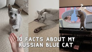 10 Facts about my Russian Blue Cat