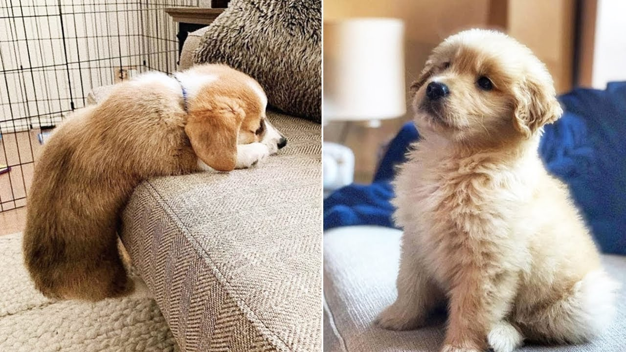 ❤️Cute Puppies Doing Funny Things ❤️6  Cutest Dogs