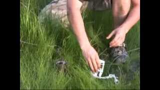 Ztrap dog proof trap with two way trigger,raccoon trapping  trapper review