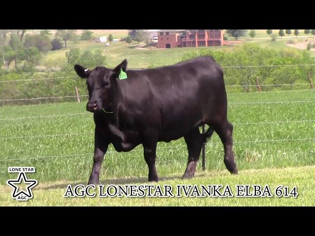 AGC Lonestar Ivanka Elba 614