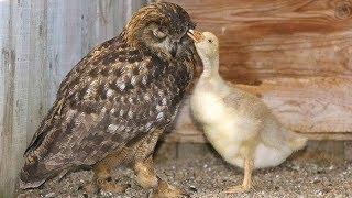 Самые трогательные поступки животных