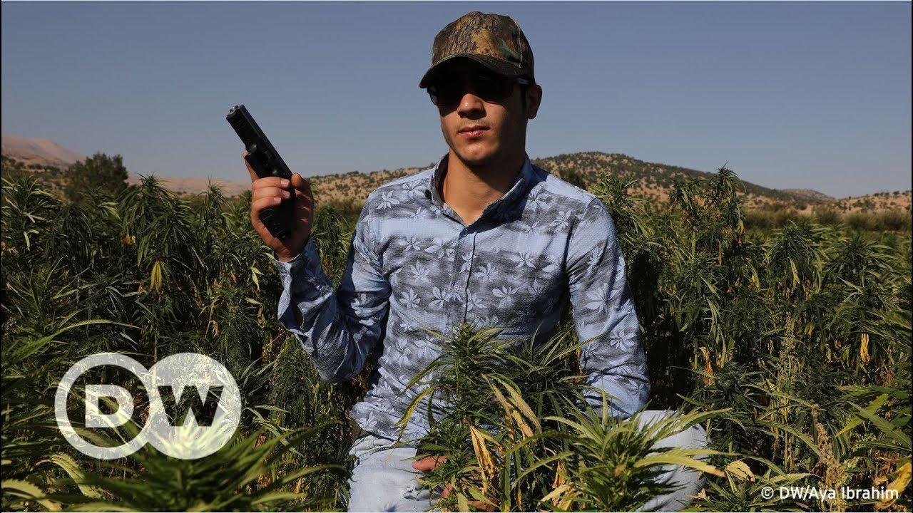 هل تشرع لبنان زراعة الحشيش؟
