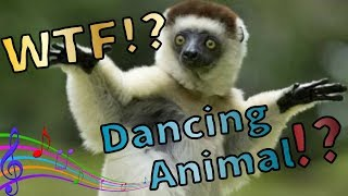 WTF!!?Animals know Music!?Funny Animal Dance Music Compliation【Try not to laugh】【爆笑動物|Funny Animal】