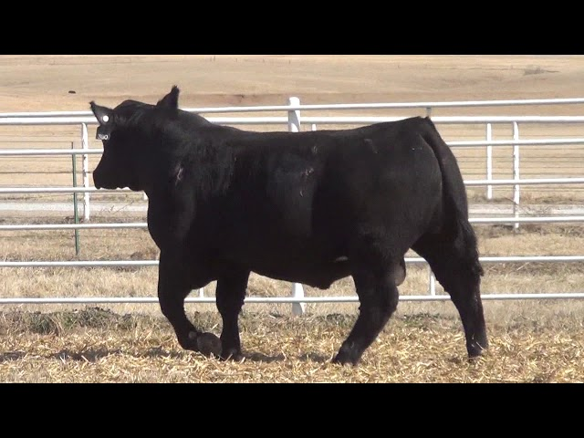 Express Ranches Lot 380