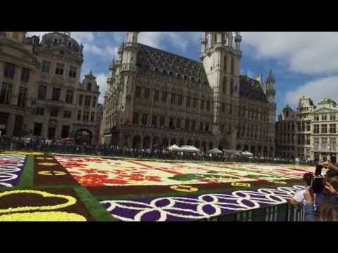 Brussels Flower Carpet 2016 - 4k