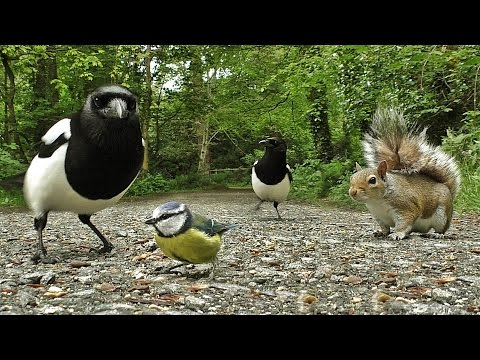 Movies for Cats - Birds and Squirrel Fun