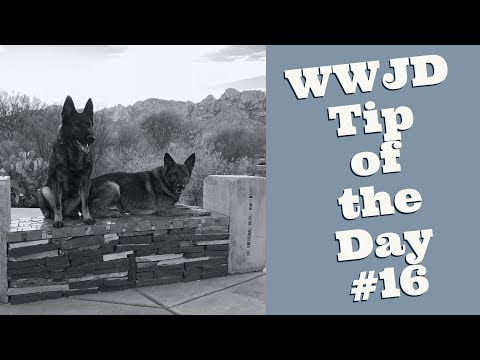 What Would Jeff Do? Dog Training Tip of the Day #16