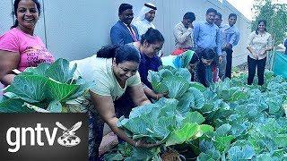 Residents go green in Muhaisnah, Dubai