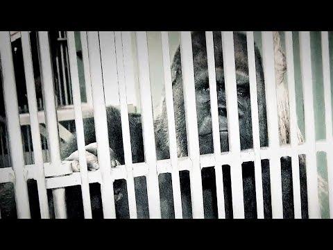 So einfach ist es, ein falsches Bild von Zoos zu verbreiten   zoos.media