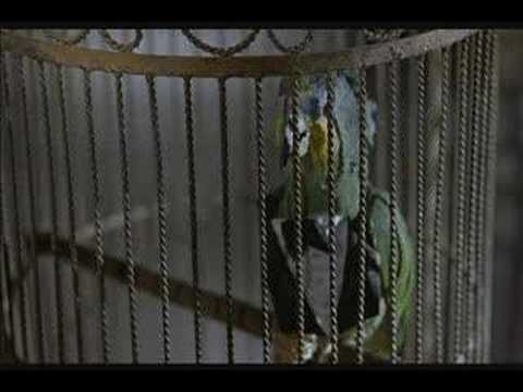 Scary Movie 2 talking bird