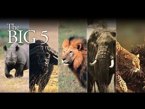 Big 5 -  An African Safari Travel Postcard