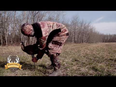 Hunting for Wild Turkey in Manitoba - Manitoba Master Hunter Minute