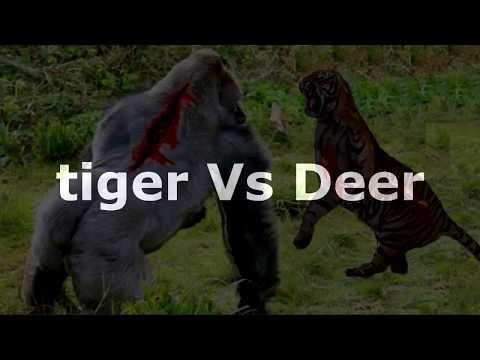 Горилла против Тигра  Лев против Бабуина  Тигр против Импалы Шедевр!