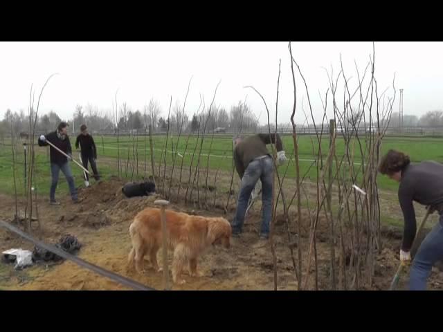 Pflanzenhütten im Offenstall - YouTube