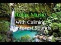 Download Relaxing Music Playlist with Calming Rainforest Sounds MP3 song and Music Video