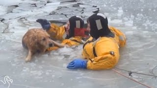 Firefighters Jump Into Icy Water To Save Freezing Dog