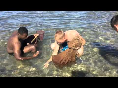 invasive-algae-clean-ups---volunteer-program