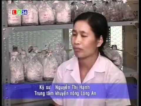 KTNN 6-8-10 Hiệu quả từ mô hình trồng nấm.wmv