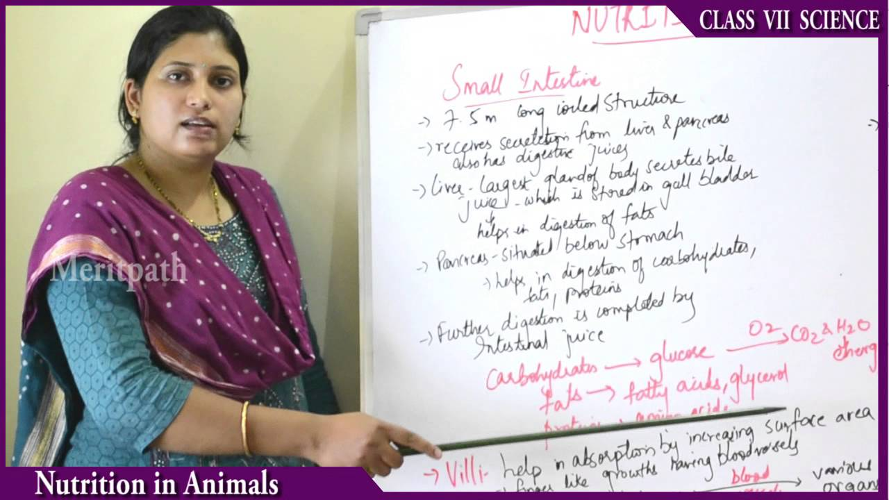 class VII Science Nutrition in Animals part 2 by MeritPath