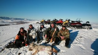 Охота на волков в Башкирии