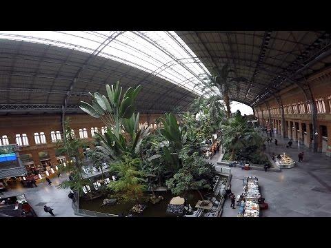 Bonsai Vlog Madrid - Otoño tropical?