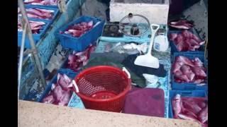 Teknik Rahsia Memancing Ikan Merah Laut Dalam
