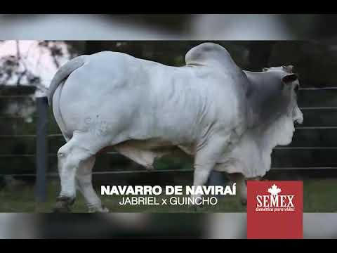 Navarro De Naviraí