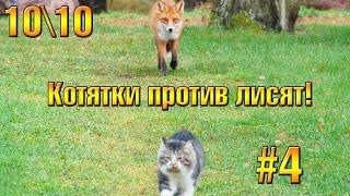 Котята против Лисят #4  - 10/10 (ФИНАЛ)