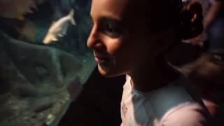 ВЛОГ ОКЕАНАРИУМ в Сочи . Обзор  Sochi Discovery World Aquarium the kids
