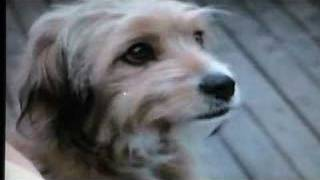 Oh! Heavenly Dog (1980) with Benji - Won't Give In