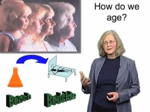 Elizabeth Blackburn (UCSF) Part 3: Stress, Telomeres and Telomerase in Humans